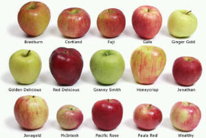 Apples come in many shapes, sizes, and colors.