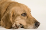 What You Should Know About Medical Marijuana forPets